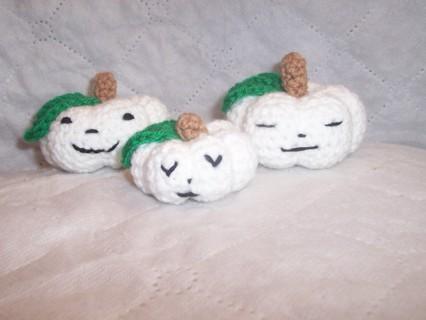 pumpkin family