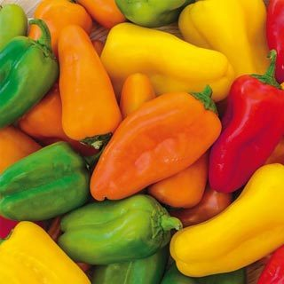 Small colored Bell Peppers