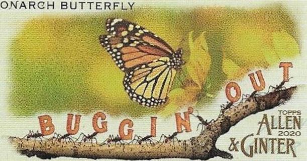 2020 ALLEN & GINTER BUGGIN OUT MONARCH BUTTERFLY INSERT MINI CARD