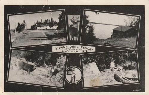 Vintage Used Postcard: 1951 Sunny Dene Resort, On Fall Lake, Ely, MN