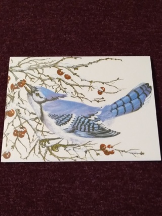 Notecard - Blue Jay