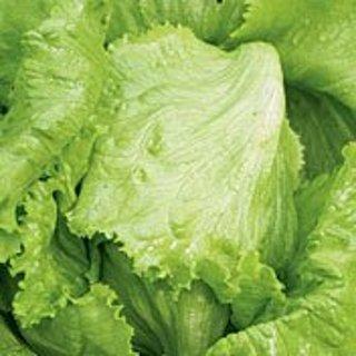 Iceberg Lettuce 25 seeds Heirloom