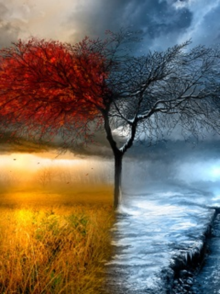 fall and winter pic