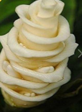Ice Cream Rose
