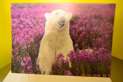 "****""POLAR BEAR PLAYING IN A FIELD OF PURPLE FLOWERS"" BLANK CARD W/ENVELOPE***FREE SHIPPING"