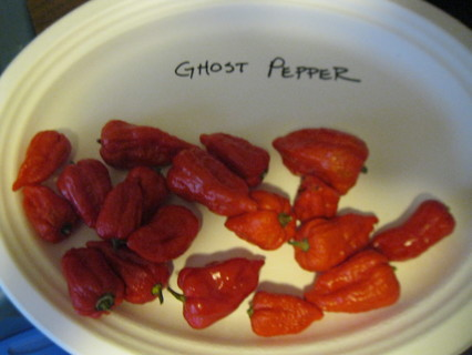10+ Seeds- Ghost Peppers- Bhut Jolokia, HOT!HOT!HOT!