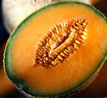 12 plus Heirloom Hearts of Gold Cantaloupe seed