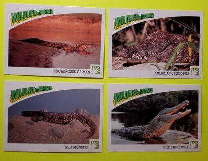 4 Wildlife Cards