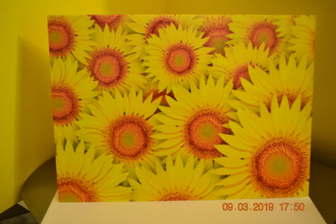 "****TONS OF SUNFLOWERS ""THANK YOU"" CARD W/ENVELOPE***FREE SHIPPING"