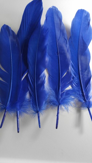 Beautiful 5 Natural Goose Feathers