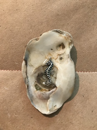 shell with charm   ID 12