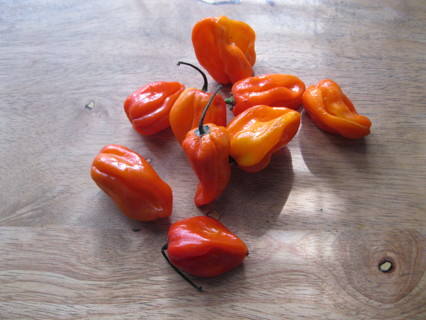 20+ Super Hot Habanero Pepper Seeds