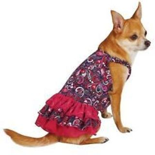Dog Dress Teacup