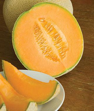 Hales Best Jumbo Melon--10 seeds