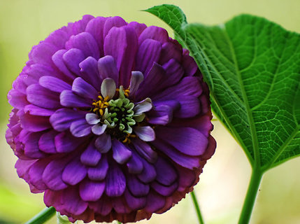 Types of beautiful flowers house beautiful house beautiful free look zinnia seeds lot 4 diffe types beautiful mightylinksfo