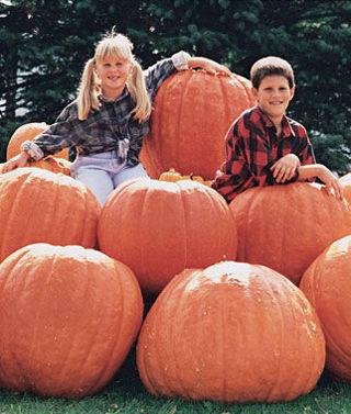 Atlantic Giant Pumpkin 5 seeds
