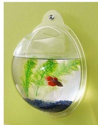 SUPER SALE FOR 2!! 200,000 CREDITS DOWN!! 2 Fish Bubble - Wall Mounted Acrylic Fish Bowl