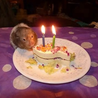 Free Hamster Birthday Cake Recipe Other Pet Items Listiacom - Hamster birthday cake
