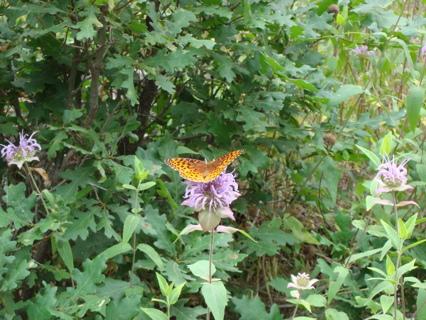 Desert Photography #1 Butterflies
