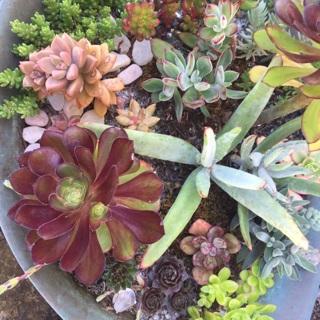 Succulent yard sale
