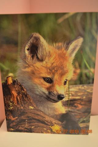 "****""CUTE LITTLE FOX"" SMALL BLANK CARD W/ENVELOPE***FREE SHIPPING"