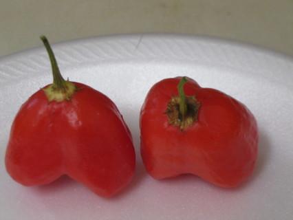 10+ Pepper Seeds (Hatch)?