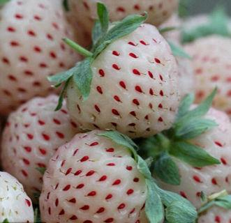 200 White Strawberry Seeds Fragaria Ananassa Organic Fruit Bulk Seed