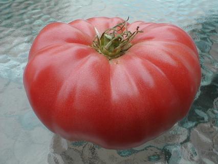 24 Heirloom Beefsteak Tomato Seeds