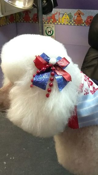 4th of July dog bows!