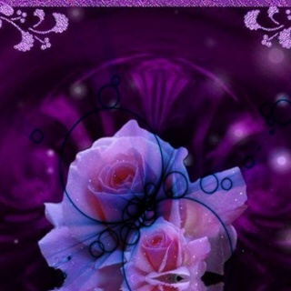 FREE Purple Rose Wallpaper For IPod IPhone