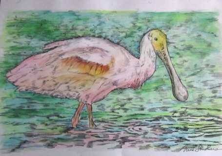 "8 x 10"" colored PRINT - spoonbill"