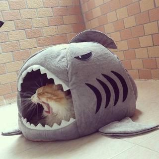 Totally Cute! Shark Pet Bed!