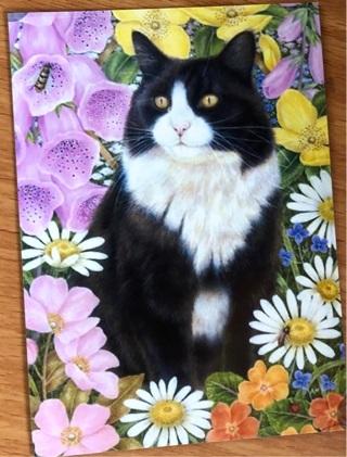 """Tuxedo Cat -  3 x 5"""" MAGNET"""