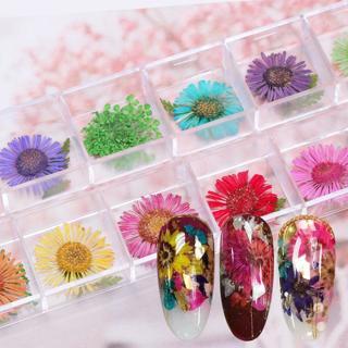 12 Colors 3D Decor Real Dry Dried Flower for UV Gel Acrylic Nail Art Tips Rakish