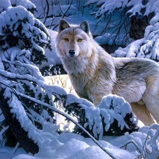 New  Wolf photo 4x6