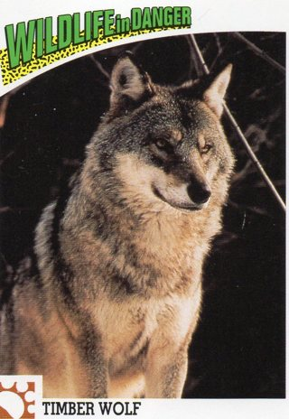 World Wide Fund for Nature: Wildlife In Danger Trade Card: Timber Wolf
