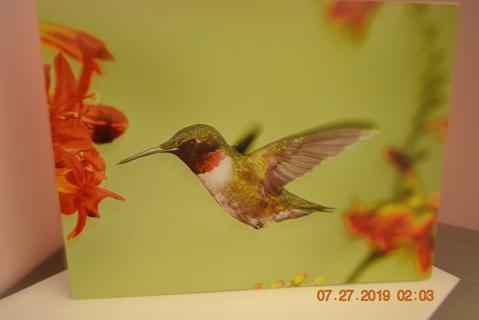 ****#1 GORGEOUS HUMMINGBIRD IN FLIGHT  BLANK CARD W/ENVELOPE***FREE SHIPPING