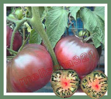 Black Seaman Tomato Seeds - Organic Heirloom