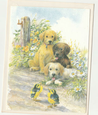 Birthday Card Unused With Envelope Cute Dogs