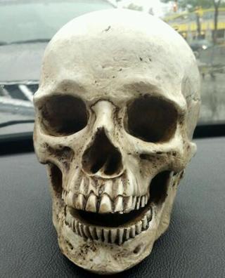 Free: REALISTIC SKULL PROP - HALLOWEEN - SKELETON HEAD - BONE HEAD ...