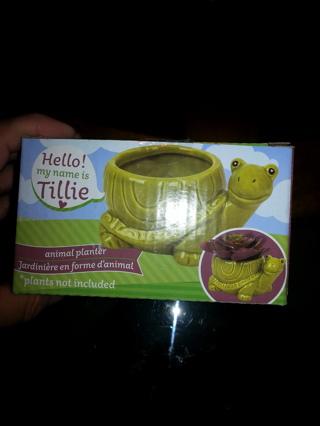 New Turtle planter