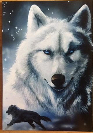 "BLUE EYED WOLF - 3 x 5"" MAGNET"