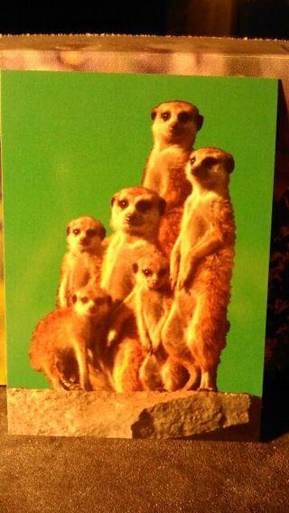 Animal Trading Card