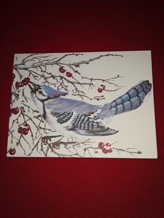 Bird Greeting Card - Blue Jay