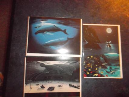 3 Ocean life scene cards w/ envelopes