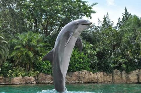 4x6 Florida Dolphin