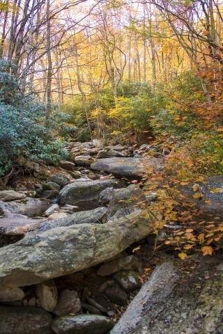 Mountain Stream in Autumn FREE SHIPPING