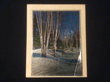 "Vintage Foil Art Print ""Sky Scraping Trees"