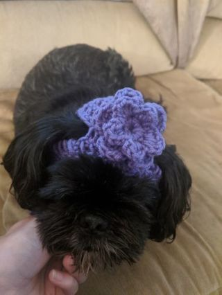 Small animal dog hat with flower crochet