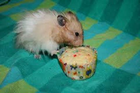 Free  Hamster Birthday Cake Recipes For Hamsters Only Other - Hamster birthday cake